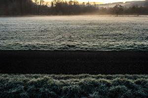 frozen-grass